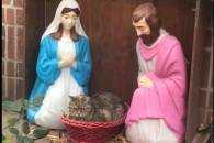 Скотиняки і Різдво: 15 котів, які впевне…