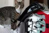 Як кошеня подорожує по світу зі своїми господарями
