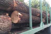 На Сумщині судитимуть лісоруба-організатора