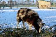 У вінницькому зоопарку не прийматимуть сухі новорічні ялинки
