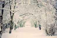 Погода у Черкасах 8 січня