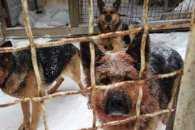 Мешканці Київщини збирають гроші для сім`ї АТОшника, якого загризли собаки