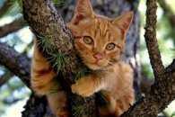 В Конотопі рятувальники відмовилися знімати з дерева кота