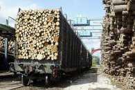 Тепер з України неможливо вивезти ділову деревину під видом паливних дров