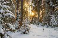 Погода у Черкасах 15 січня