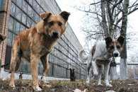 Влада Миколаєва віддала на аутсорсинг обов'язки стерилізації собак у місті