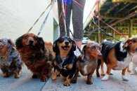 Вигул собак став предметом суперечок між киянами