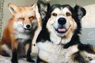 Як зворушливо і смішно виглядають тварини, які дружать все життя