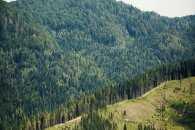 Українських лісів відновлюють більше, ніж вирубують