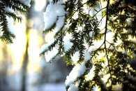 Закарпаття: прогноз погоди на 17 січня - без опадів