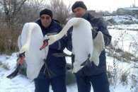 Житомирські ДСНСники врятували двох лебедів