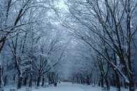 Львів'янину вдалося сфотографувати Снігову Людину (ФОТО)