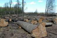 За весь 2016-й закарпатська поліція відкрила півсотні справ про незаконну вирубку лісу