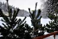 На Закарпатті майже чотири сотні охоронців ялинок знайшли п'ять зрубаних дерев