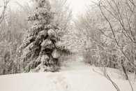 Закарпаття: прогноз погоди на 21 січня - куди вітер