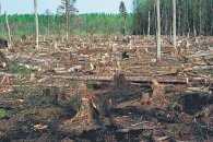 """Біля зруйнованого кінотеатру """"Нивки"""" масово вирубують дерева"""