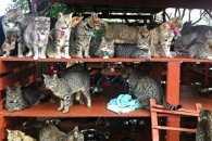 Як виглядає справжній острівний рай для котів
