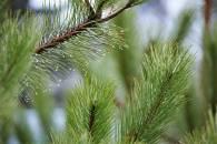 В Харькове новогодними елками накормят животных