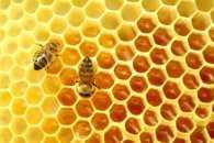 """10 жовтня - """"солодкий"""" день, коли без меду не обійтися"""
