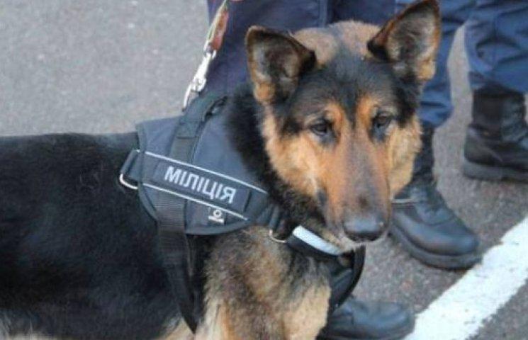 На агресивних ужгородських ромів полюватимуть зі службовими собаками