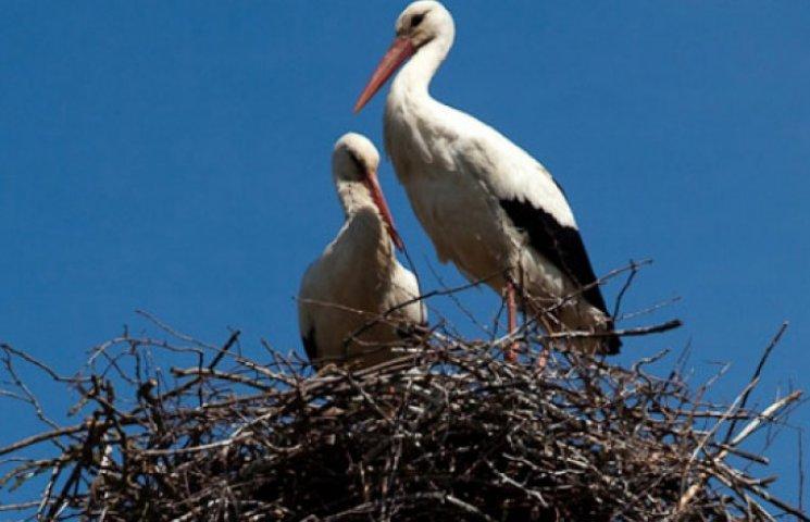 Закарпатська міліція звинуватила птахів у масовому отруєнні людей під час богослужіння