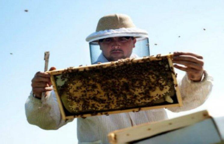 """Чому українській """"еліті"""" не загрожують ні бджоли, ні книжки"""