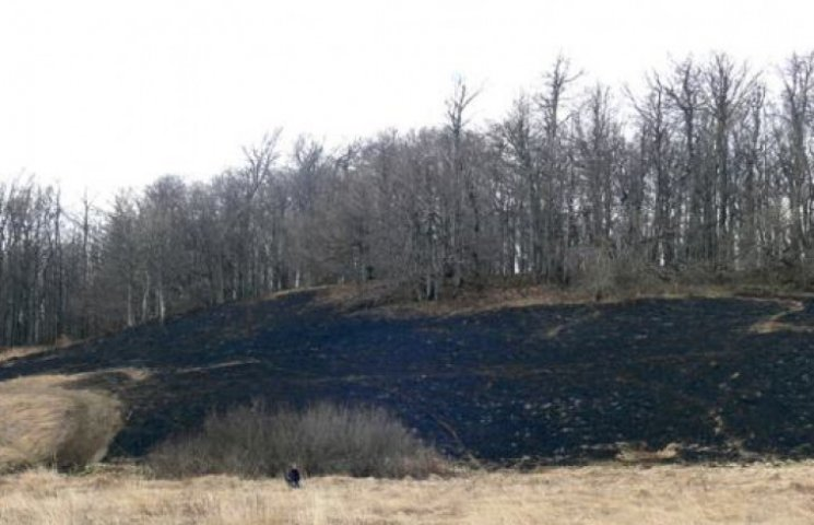 На Закарпатті згоріли червонокнижні рослини (ФОТОФАКТ)