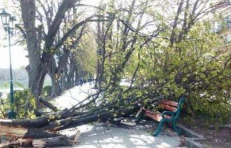 Півтора мільйона гривень на благоустрій Ужгорода замало: дерева продовжують падати (ФОТОФАКТ)