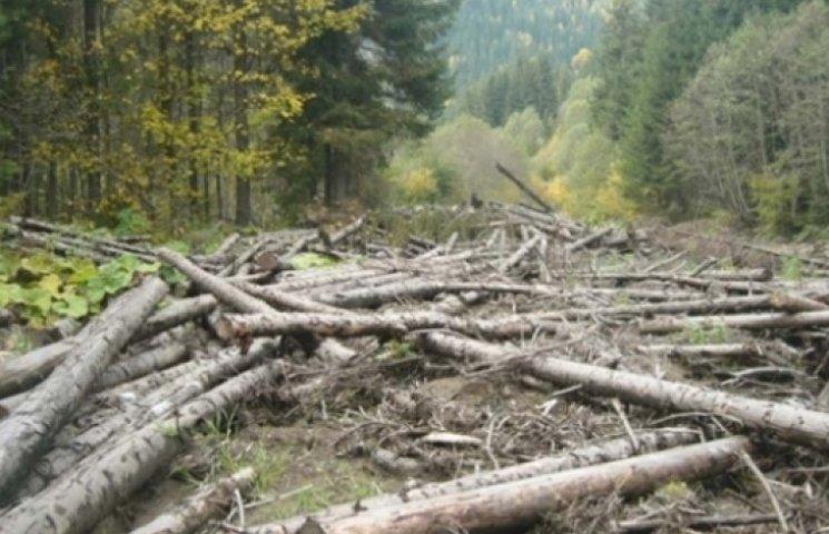 На Закарпатті незаконно рубають ліс на сотні тисяч гривень