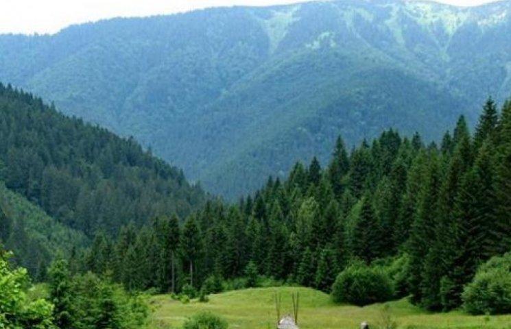 Закарпаття лідирує у ТОП-5 квіткових місць України (ФОТОФАКТ)