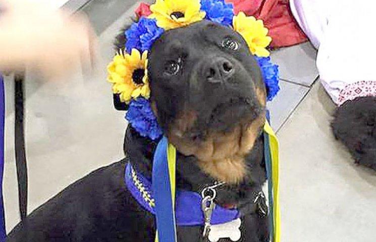 Як у Києві собаки дефілювали у вишиванках, шароварах і з оселедцями (ФОТО)