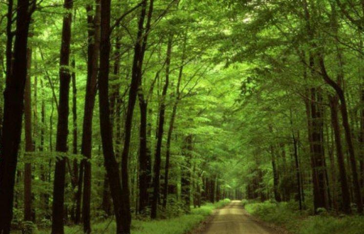 Сумським СБУшникам виділили майже три гектари лісу у Косівщині