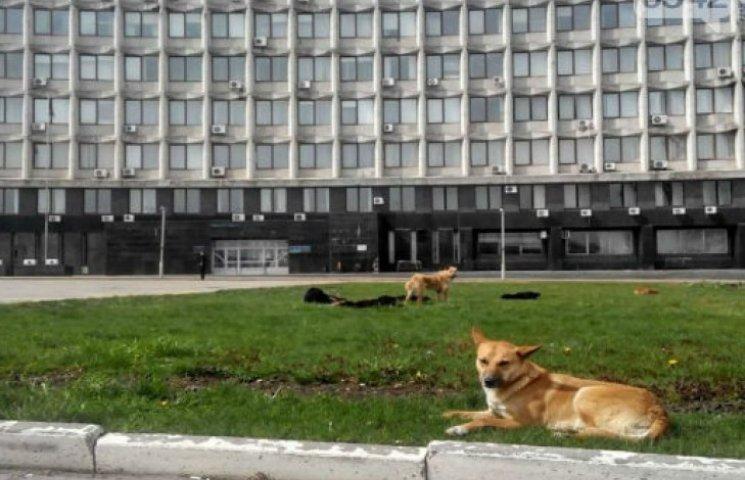 У Сумах собаки влаштували базу відпочинку біля мерії