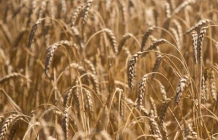 Закарпатське зерно найдешевше на Західній Україні
