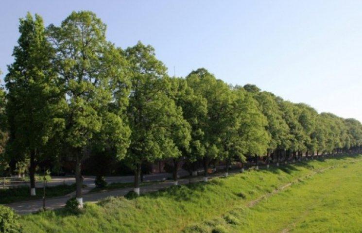 На сакурах світ клином не зійшовся: В Ужгороді є ще дві знакові алеї (ВІДЕО)