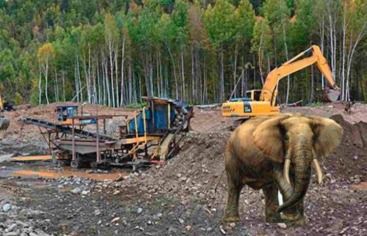 У Держприкордонслужбі розповіли про слона-ненависника копачів бурштину
