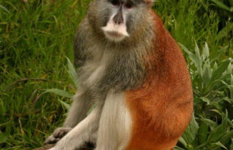 Зиму у вінницькому зоопарку не пережила одна мавпочка