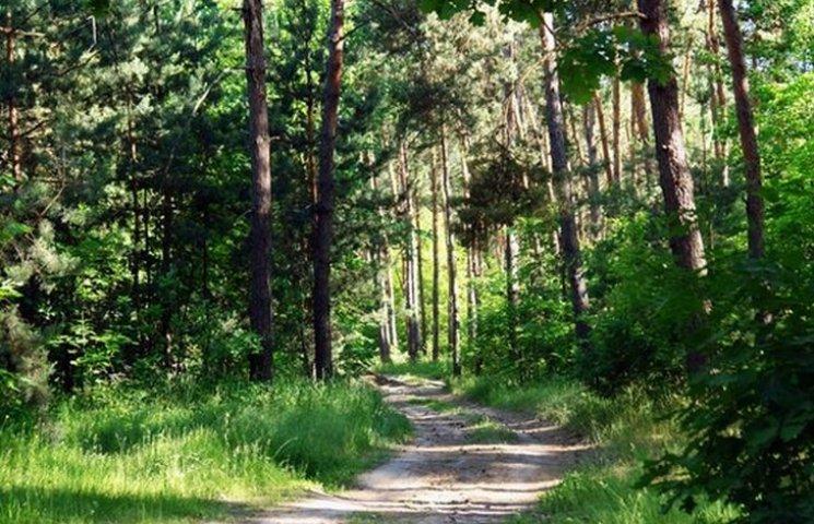 У Вінницьких лісах заборонили галасувати