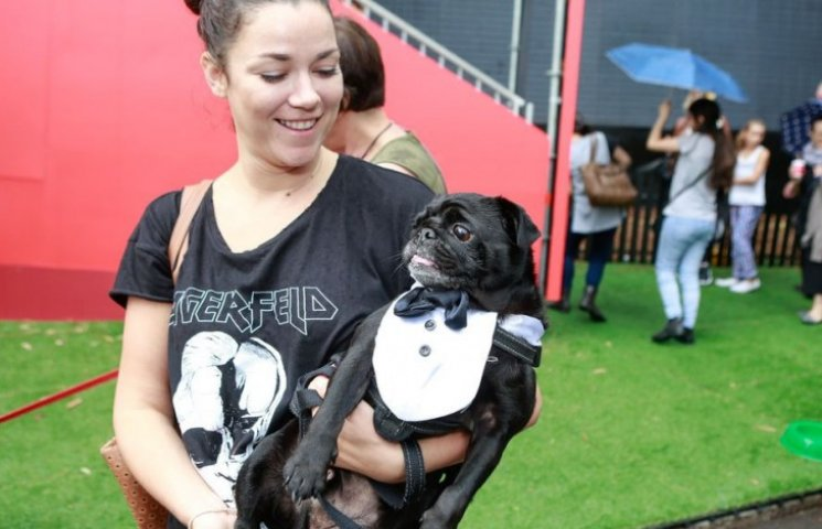 Як в Австралії собаки в костюмах до опери ходили