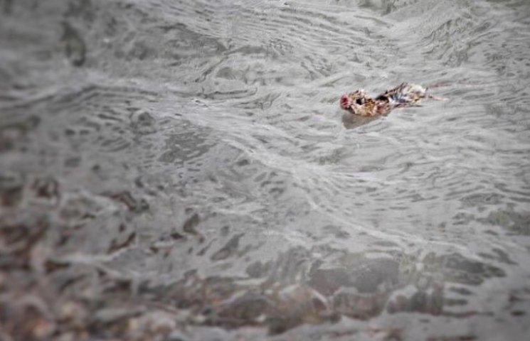 Как женщина спасла мышь, которая плавала в ледяной воде