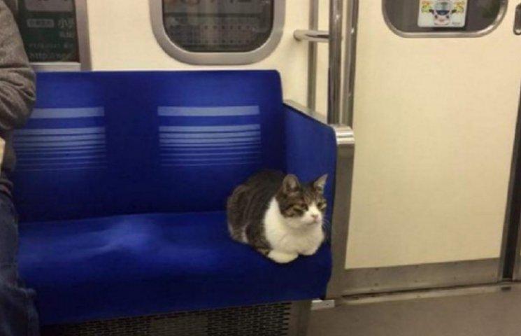 Как в Токио кот катается в метро