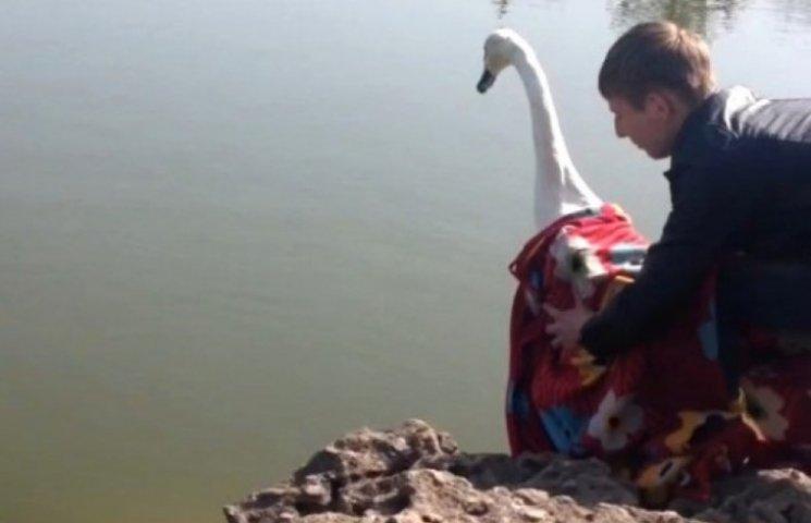 У ставки одеського парку Перемоги випустили лебедів (ФОТО)