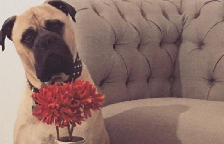 Собака, який постійно шпигує за своєю власницею, підірвав інтернет