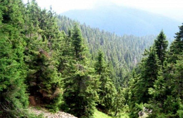 Відеоролики, на яких Буковиною вивозять український ліс заполонили мережу