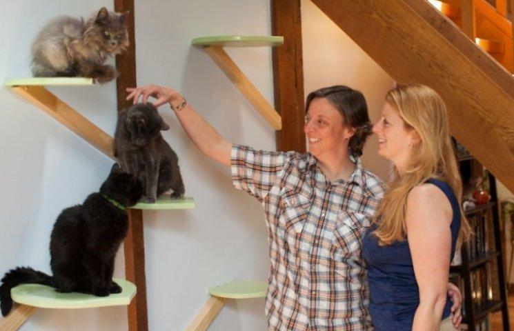 Як британки переробили свій будинок для комфорту котів