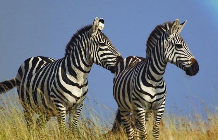 Вінницький зоопарк купить пару нових жителів за 10 тисяч євро
