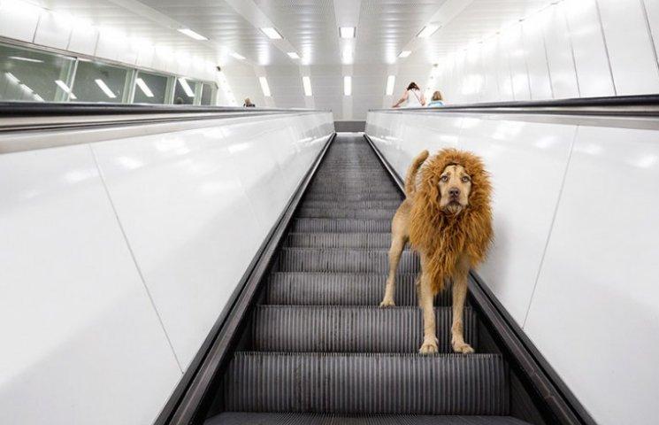 Як бездомний пес, знайдений у смітті, перетворився на Короля Лева
