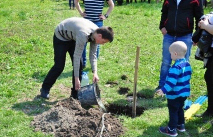 """Вінничани висадили півтори тисячі """"Дерев миру"""""""
