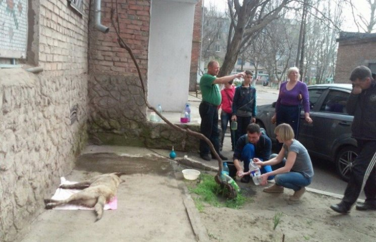 У Миколаєві знов труять вуличних собак