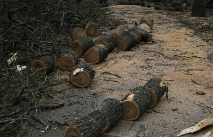 У Миколаєві під виглядом кронування дерева пиляють на дрова